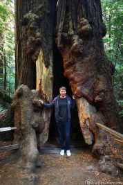 The Muir Woods in California