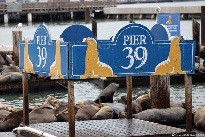 Die Seelöwen-Kolonie am Pier 39