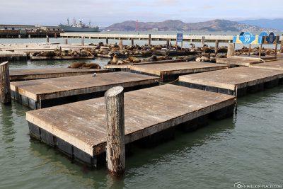 Die Pontons für die Seelöwen