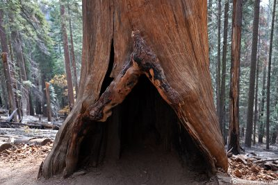A hollowed-out trunk