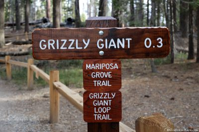 Path to Grizzly Giant