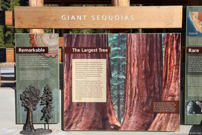 Information board about the Giant Sequoias