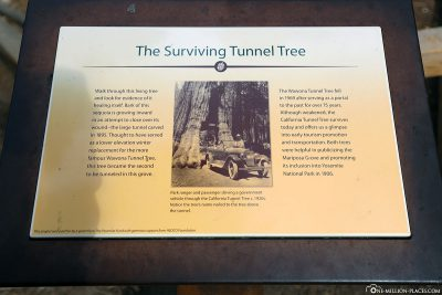 Info board at the Tunnel Tree