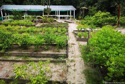 Der Chefs Garden