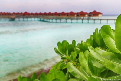 Vegetation at ROBINSON Club Maldives