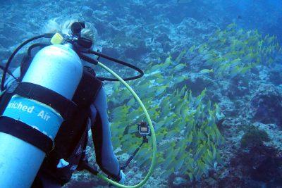 Sandra filming underwater
