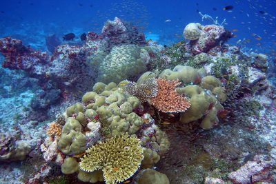 A beautiful part of the reef