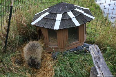 Das Gehege des Stachelschweins