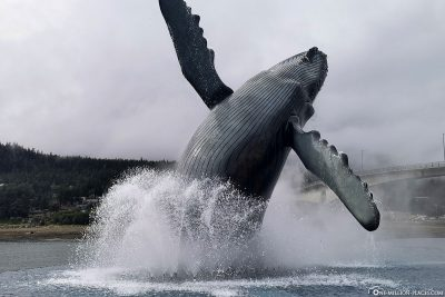 Statue of a humpback whale