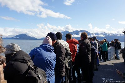 Whale watching on the boat