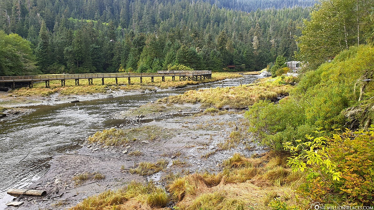 Alaska Rainforest Sanctuary, Ketchikan, Reisebericht, USA
