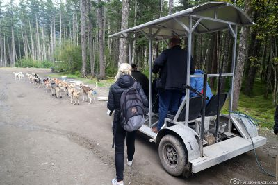 Entry into the dog sled