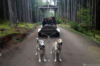 The dog sleds on wheels