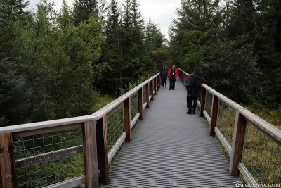 Der Steep Creek Trail