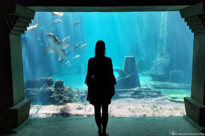 The Dig Aquarium