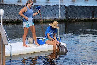 Übung zur Süßwasser-Zufuhr