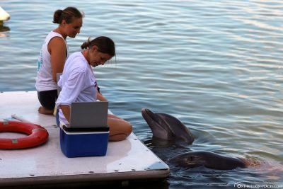 Die Tiertrainer im Dolphin Research Center