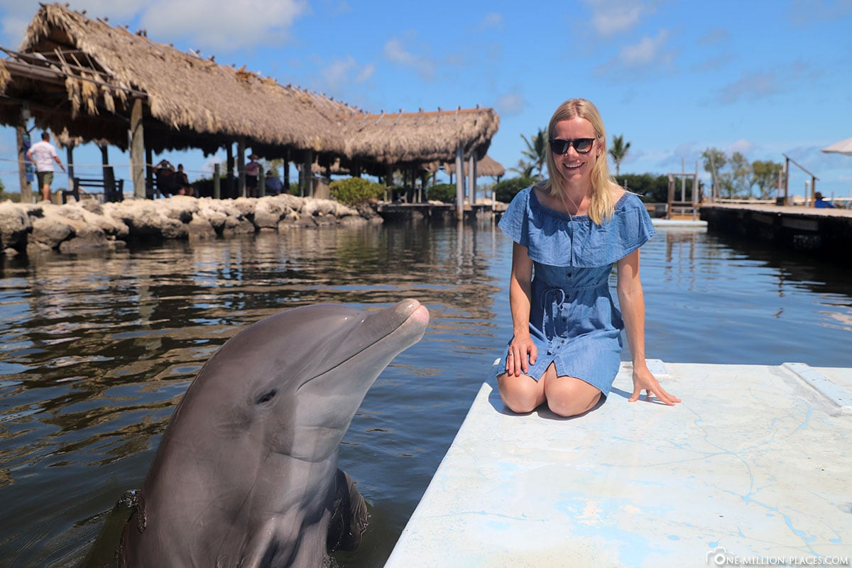 Dolphin Research Center, Interaction, Dolphin, Interaction, Florida Keys, Sight, Travelreport