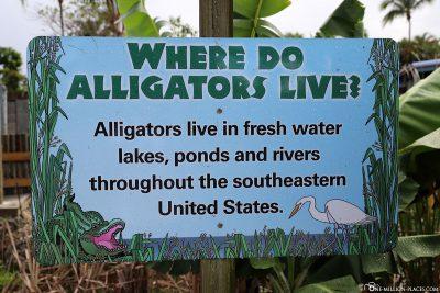 Infotafel über Alligatoren