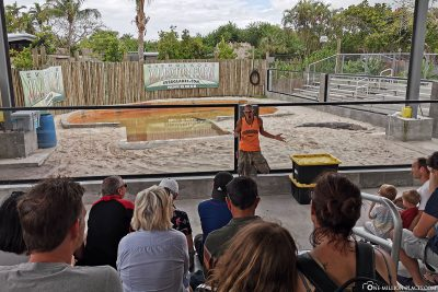 Die Schlangen-Show
