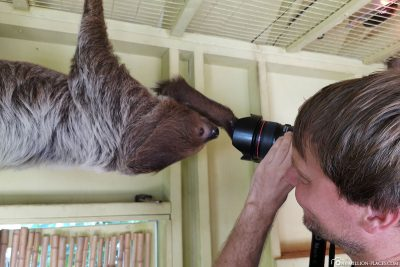 Up Close with a sloth
