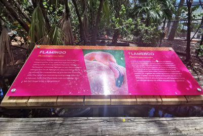 The Flamingo Enclosure