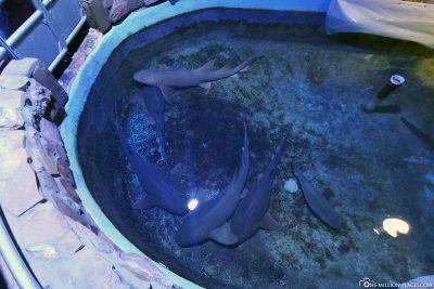 Sharks at Key West Aquarium