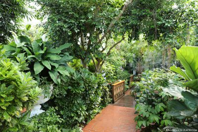 The way through the garden