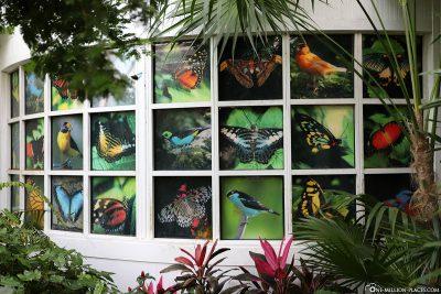Übersicht über die Schmetterlinge