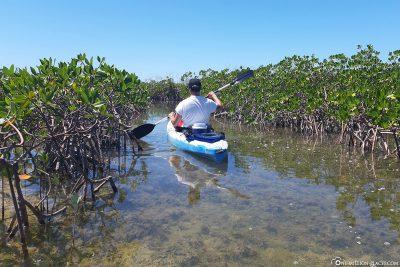 Mit dem Kajak durch die Mangroven