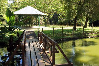 The Botanical Garden in Mauritius