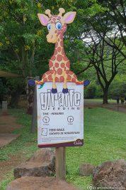 Giraffe Feeding in Casela Park