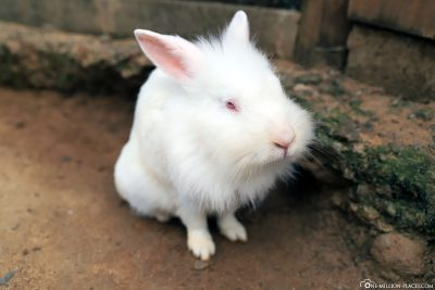 A rabbit in a petting zoo