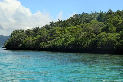 The small protected island of Ile aux Aigrettes