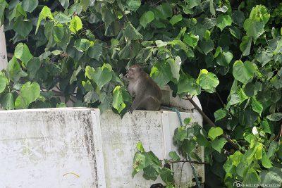 A monkey on a boat