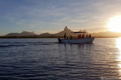 Dolphin tour in Mauritius