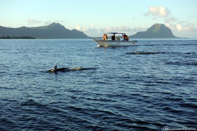 A group of dolphins