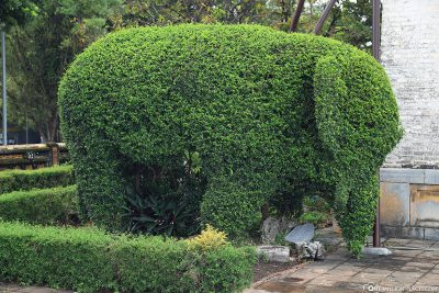 Shape cut of an elephant
