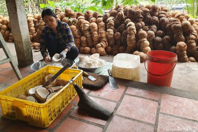 Frische Kokosnüsse