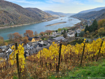 View of the wine slopes & the Rhine
