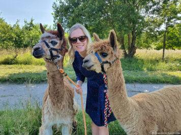 Our hike with alpacas on the Moselle