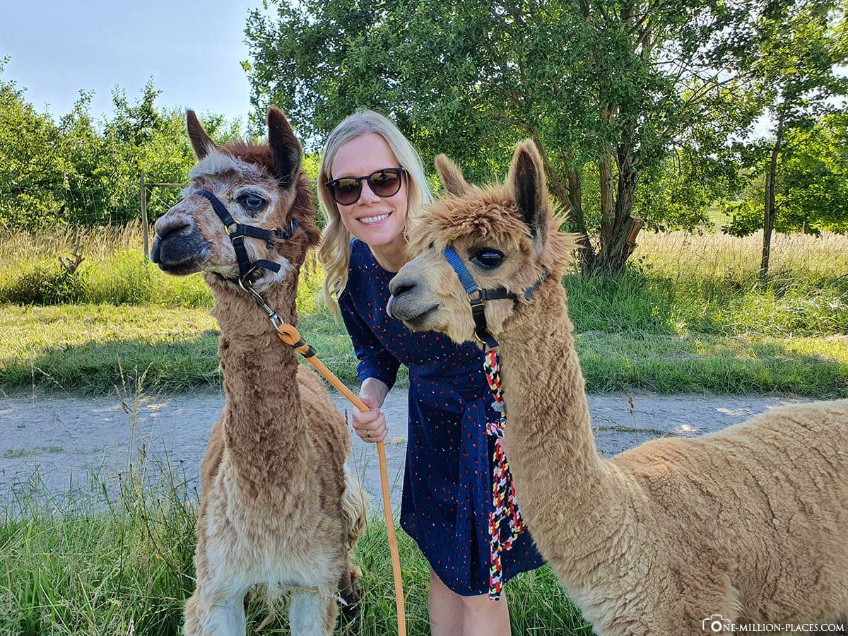 Wanderung mit Alpakas, Alpakahof Abayomi-Lieser, Mosel, Sehenswürdigkeiten, Rheinland-Pfalz, Urlaub in Deutschland, Reisebericht