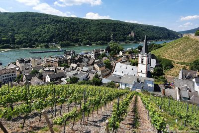 The vineyards in Assmannshausen