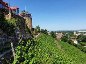 Weinhänge am Kauzenberg