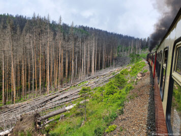 Die abgestorbenen Bäume entlang der Bahnstrecke