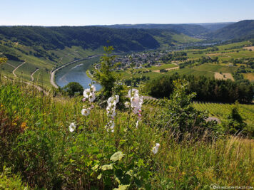 View into the Moselle Valley