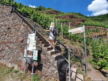 The steepest vineyard in Europe