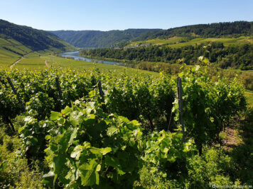 Vineyards on the Moselle