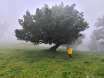 Hike in the cloud forest of Madeira