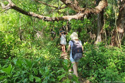 Wanderung durch den Dschungel